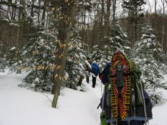 Starting up the Webster-Jackson Trail, Crawford Notch, NH